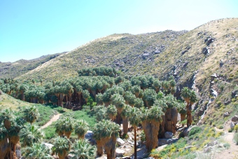 Palm Canyons on Palm Canyon Drive in Palm Springs, California