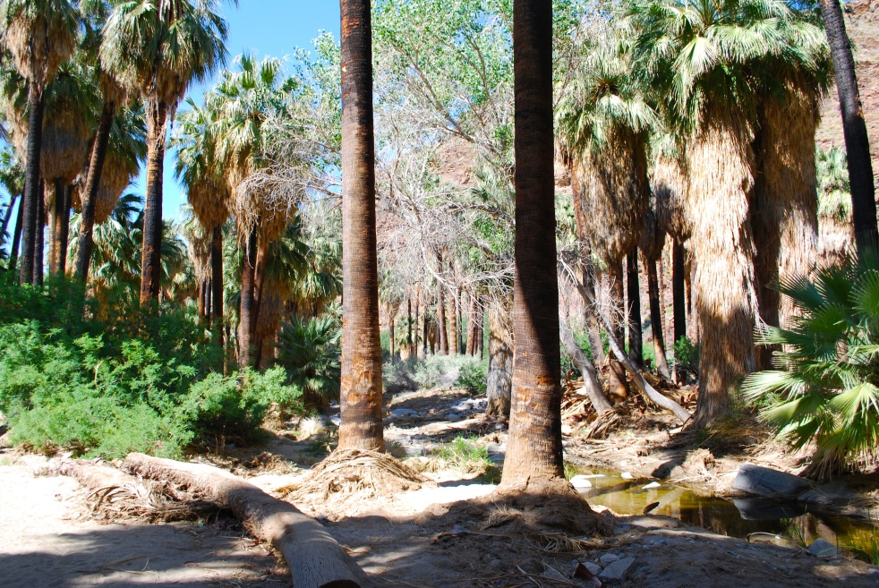 Palm Canyons palm tree forest